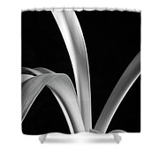 Sensuous Amaryllis Leaves Shower Curtain