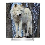Sentry Wolf Shower Curtain