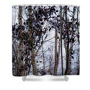 Sepia Aspens Shower Curtain