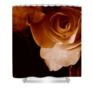 Sepia Series - Rose Petals Shower Curtain
