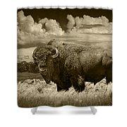 Sepia Toned Photograph Of An American Buffalo Shower Curtain