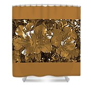 Sepia Toned Pink Bevy Of Beauties In Grayscale Shower Curtain