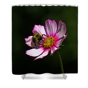 September Bee On Cosmos Shower Curtain