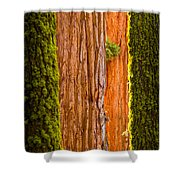 Sequoia Abstract Shower Curtain
