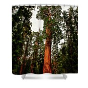 Sequoia In Kings Canyon Shower Curtain