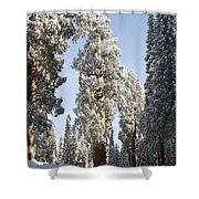 Sequoia National Park 4 Shower Curtain