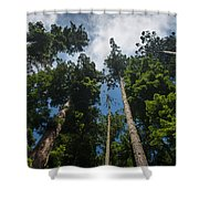 Sequoia Park Redwoods Reaching To The Sky Shower Curtain