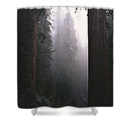 Sequoia Trees Dwarf A Car Traveling Shower Curtain