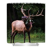 Serenade  Shower Curtain by Andrea Silies