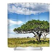 Serengeti Acacia Shower Curtain
