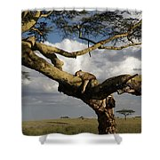 Serengeti Dreams Shower Curtain