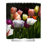 Seriously Colourful Shower Curtain
