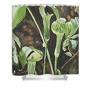 Sermon In The Woods Shower Curtain