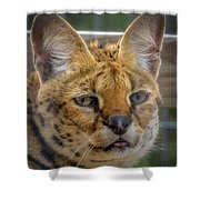 Serval Cat Shower Curtain