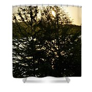 Setting Sun Through A Cypress Tree Shower Curtain