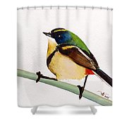 Seven Colors Shower Curtain