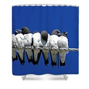 Seven Swallows Sitting Shower Curtain