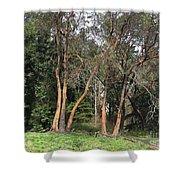 Seward Park Trees Shower Curtain