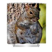 Sexy Squirrel Shower Curtain
