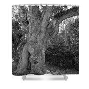 Kingsley Plantation Tree Shower Curtain