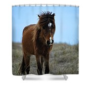 Shackleford Banks Pony Shower Curtain