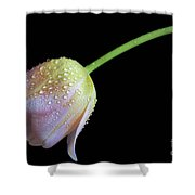 Shade Tulip Shower Curtain by Tracy Hall