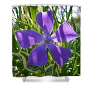 Shaded Greater Periwinkle Shower Curtain