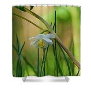 Shaded Mayapple Shower Curtain