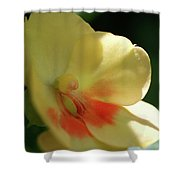 Shaded Yellow Orchid Shower Curtain