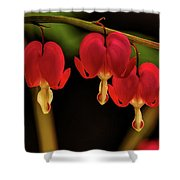 Shades Of Bleeding Hearts Shower Curtain