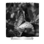 Shades Of Flight Shower Curtain