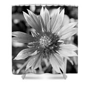 Shades Of Gray Flower By Earl's Photography Shower Curtain