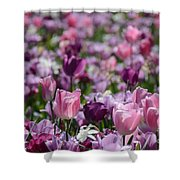 Days Of Wine And Tulips Shower Curtain