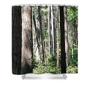 Shades Of Trees Shower Curtain
