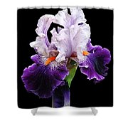 Shades Of Violet Shower Curtain