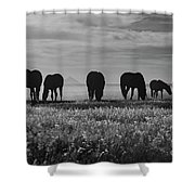 Shadow Dancer Shower Curtain