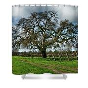 Shadow Of Great Oak Shower Curtain