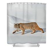 Shadow Walker Shower Curtain