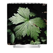 Shadowcrawler Shower Curtain