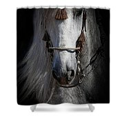 Shadowed Andalusian  Shower Curtain