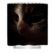 Shadows Of A Cat Shower Curtain