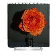 Shadows Of A Peach Rose Shower Curtain