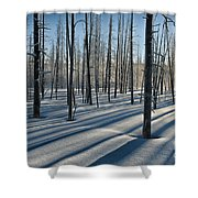 Shadows Of The Forest Shower Curtain