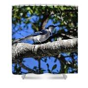 Shadowy Blue Jay Shower Curtain