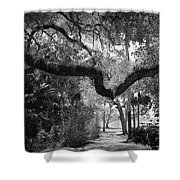 Shadowy Pathway Shower Curtain
