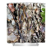 River Birch Shower Curtain