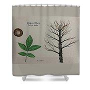Shagbark Hickory Tree Id Shower Curtain