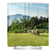 Shaggy Shower Curtain