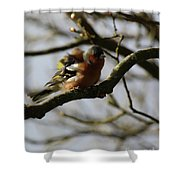 Shake Your Tail Feather Shower Curtain