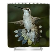Shake Your Tail Feathers Shower Curtain